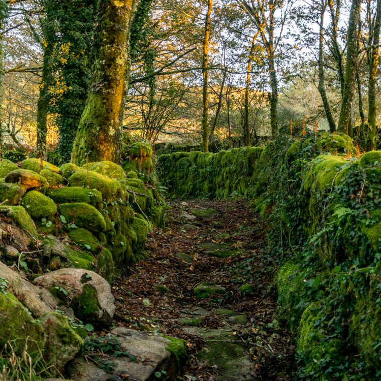 walls covered with moss in Galicia