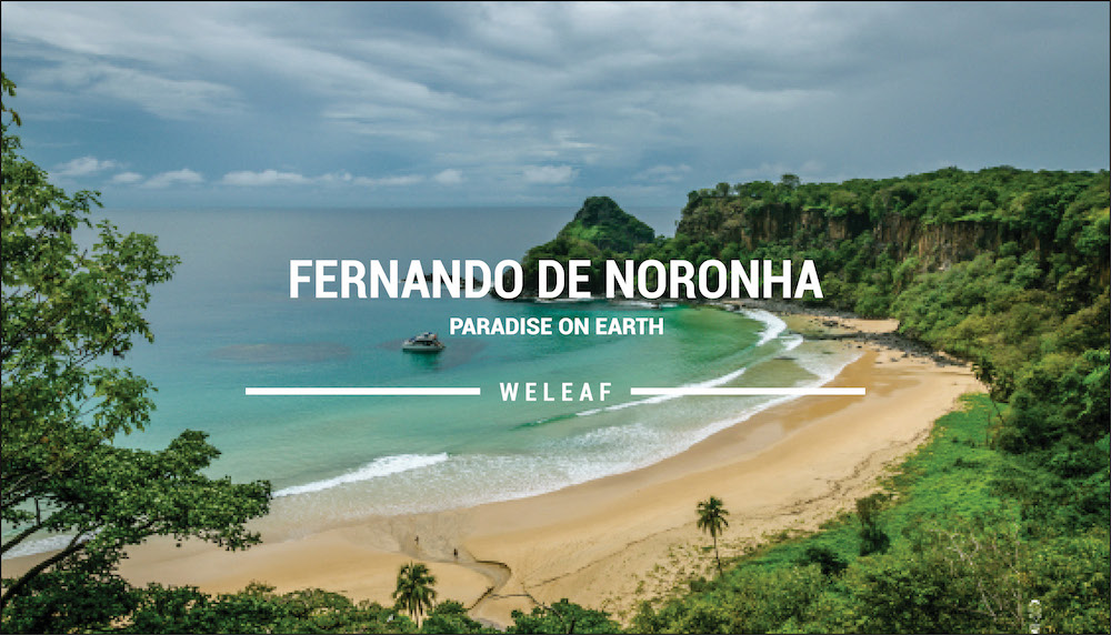 Fernando de Noronha video