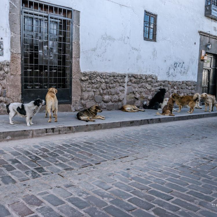 de ultieme tip tegen loslopende straathonden