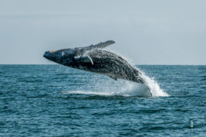 whale watching in Mancora