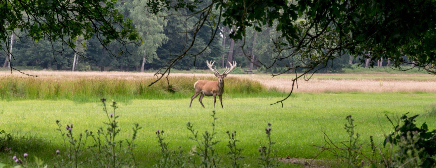 Rewilding Europe