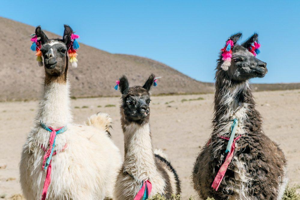 Fietsen in Zuid-Amerika, van noord naar zuid of omgekeerd?