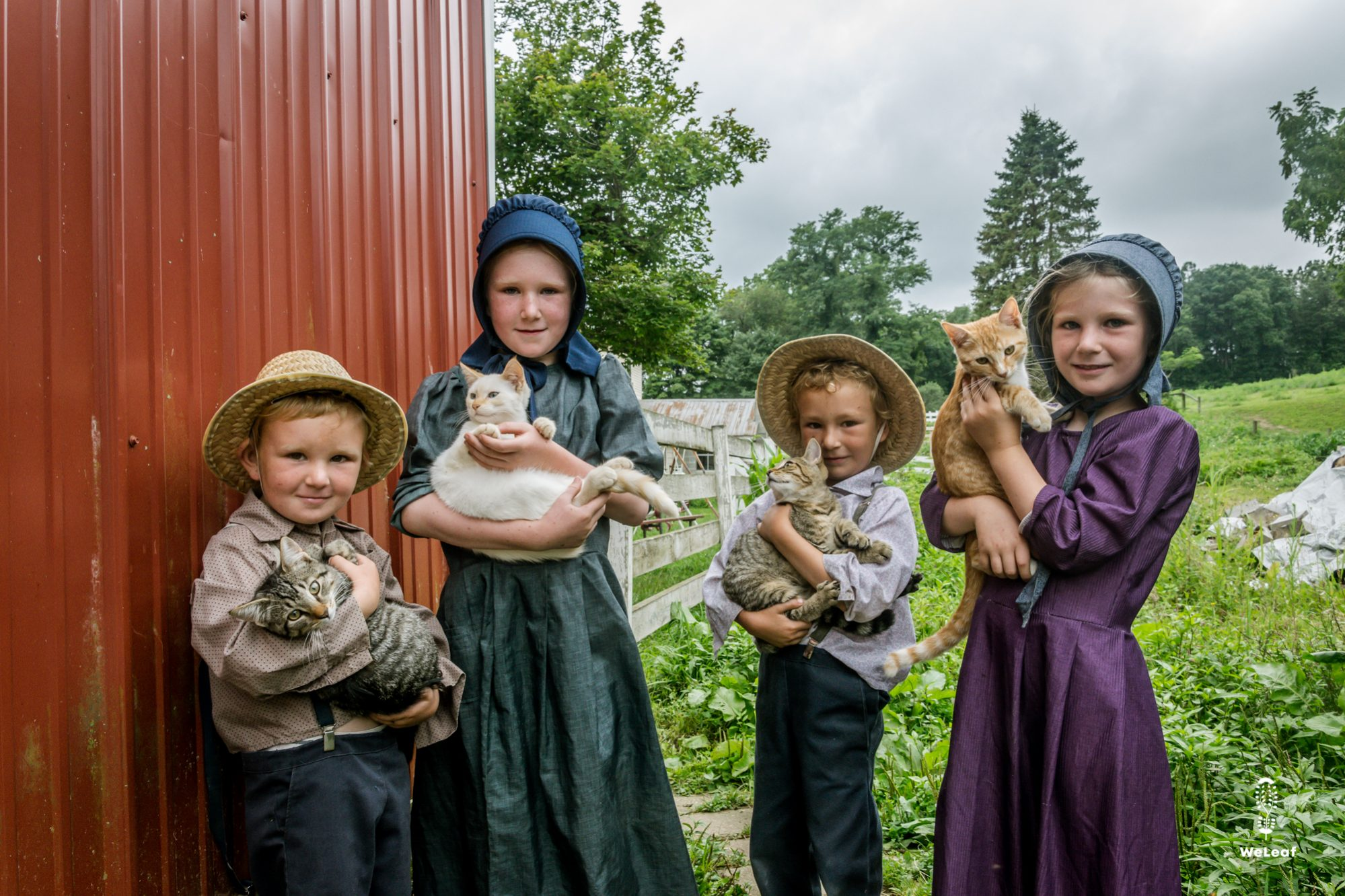 mennonite children holding cats