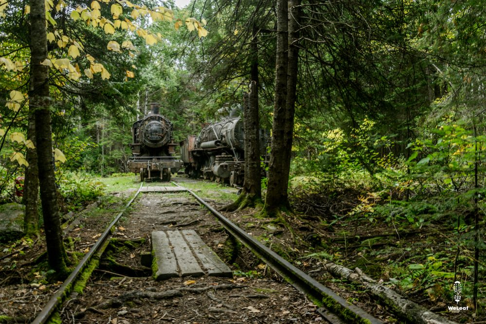 The industrial wilderness