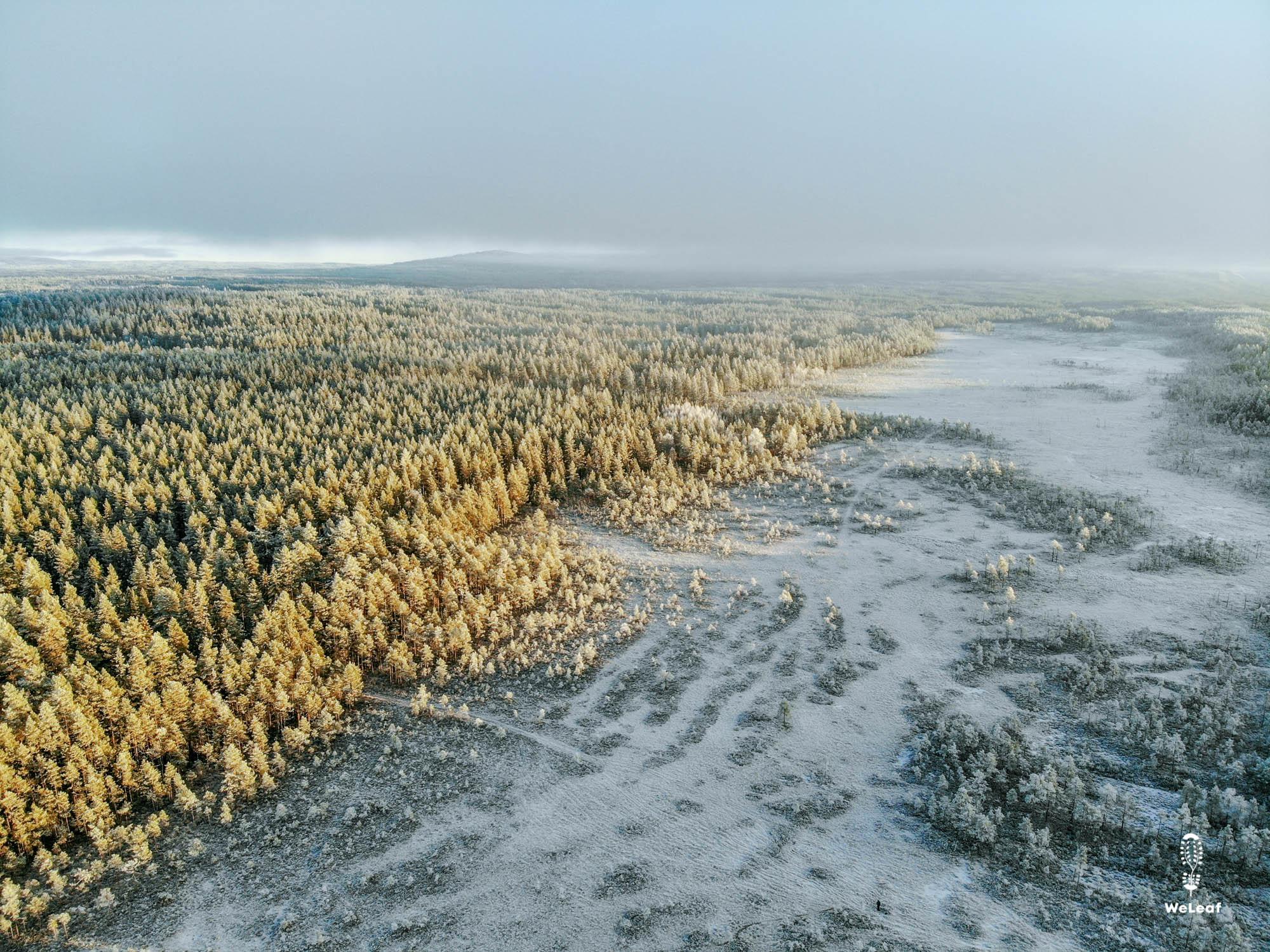 winter landscape Värmland