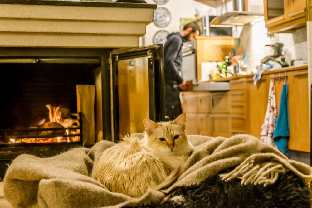 cat enjoying a fireplace