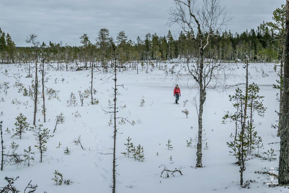 snowshoe sweden