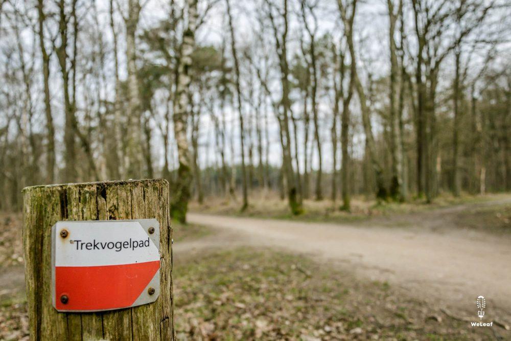 Wild adventures in The Netherlands